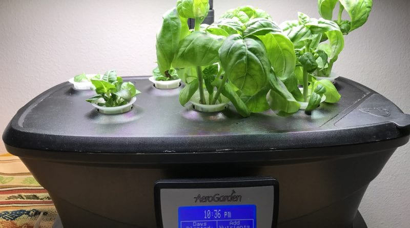 aerogarden led ultra thai holy basil italian sweet | www.alldayieat.com