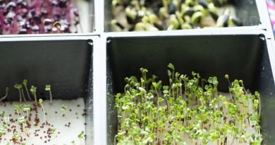 Hydroponic Sectional Microgreens Growing Kit Review | Start Growing Microgreens Today! 😮